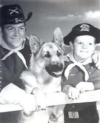 Picture of Rin Tin Tin